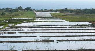 忠勇社區一帶的水稻梯田將陸續插秧,「水梯」望去似連接太平洋,別有風情。 / 記者謝龍田/攝影