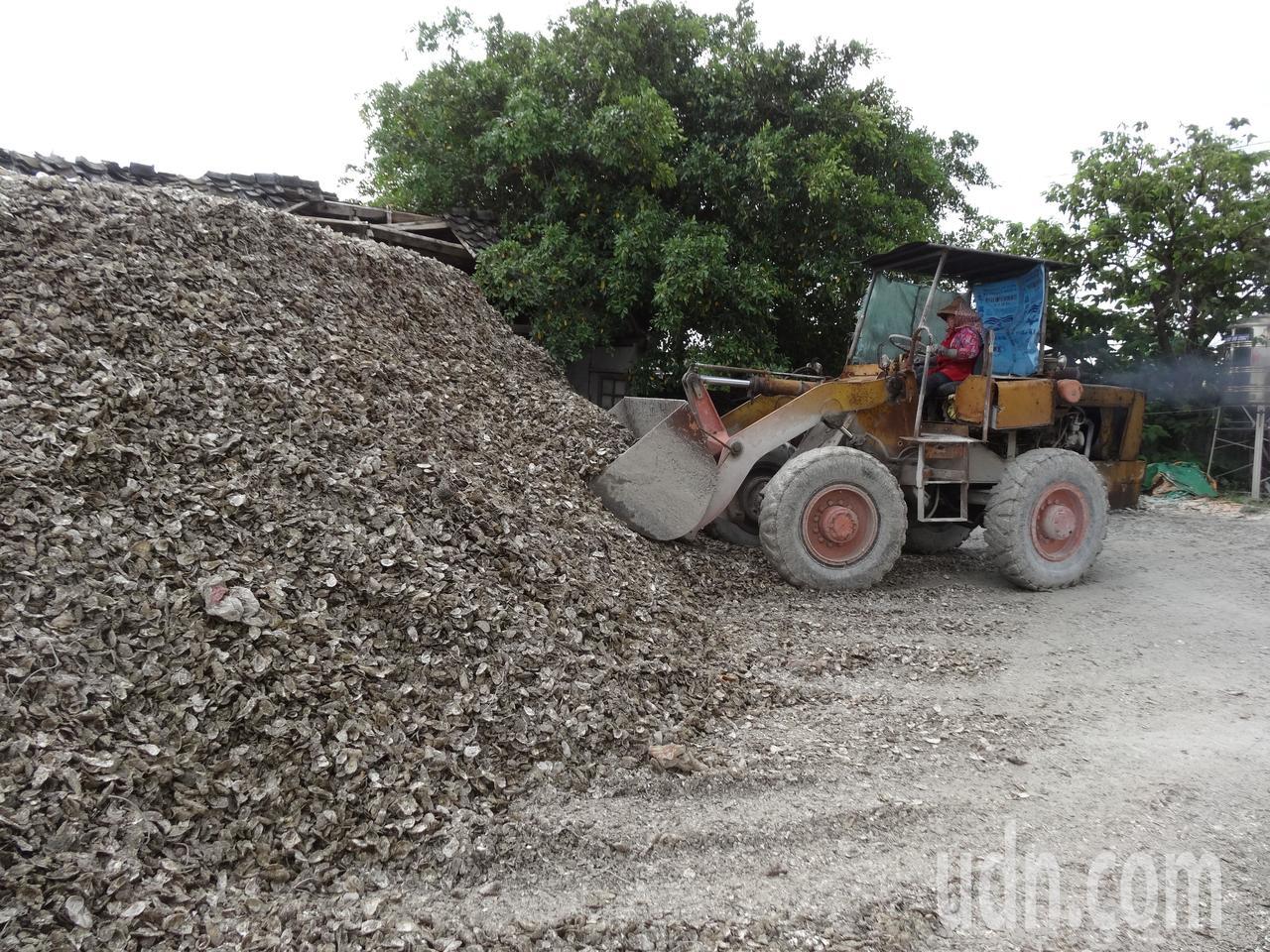 蚵殼變黃金!台糖明年在東石鄉投資建蚵殼回收處理廠