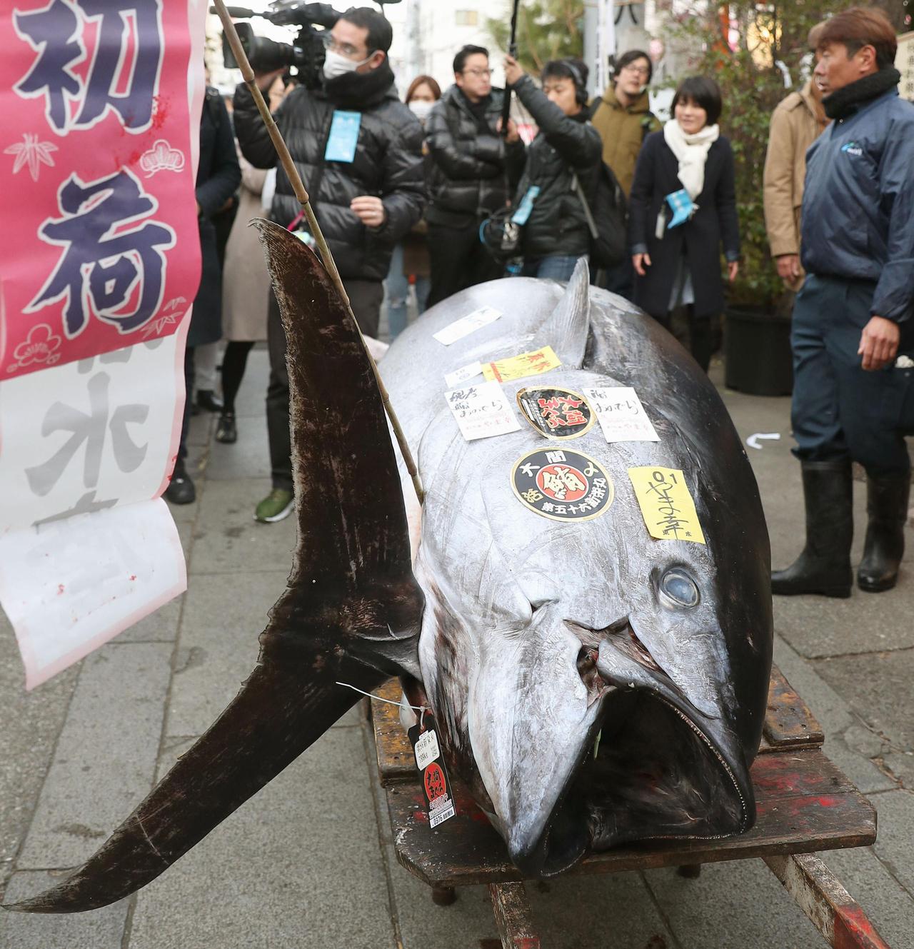 影/築地市場最後拍賣 「鮪魚王」3650萬日圓賣出