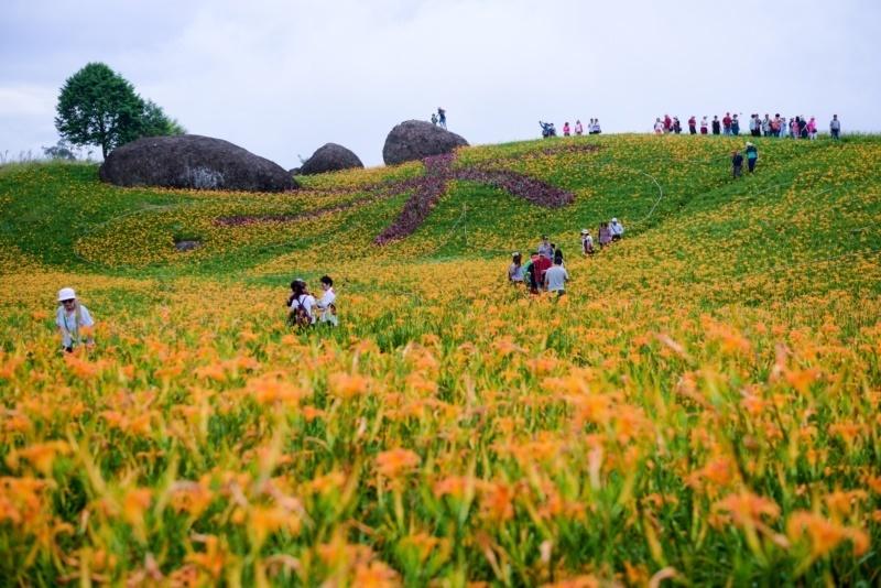全台最大片金針花海在花蓮,搭小團遊程精緻賞玩! | 愛玩橘 | 橘世代