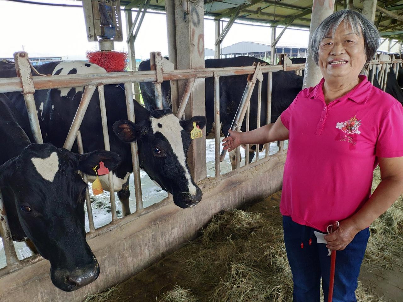 博士退休,轉當牛農!「專業養職業」創造高收入 | 橘世代