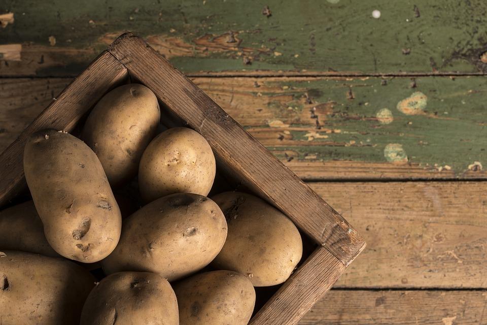發芽後更營養?一張圖看懂食材發芽能不能吃! | 橘世代