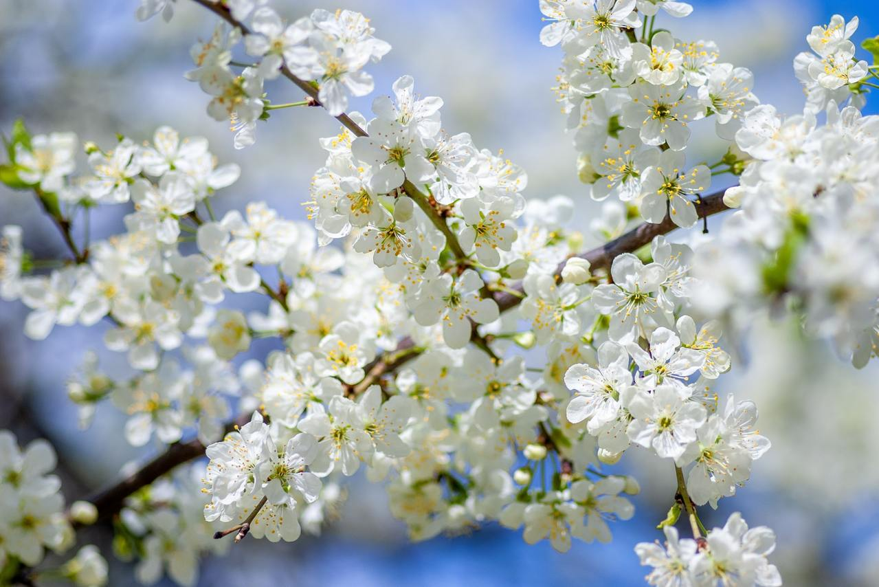 梅花季/寒流之賜!兩大賞梅熱點接棒盛開中 | 橘世代
