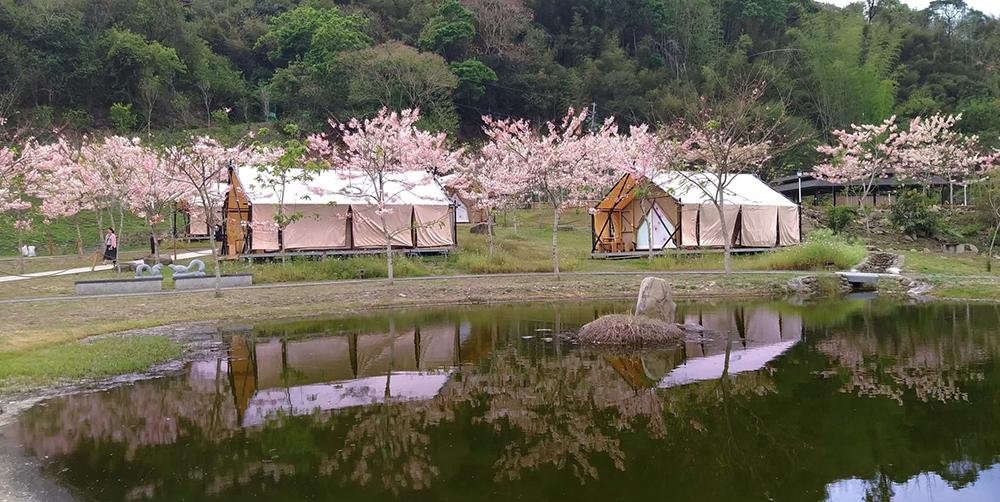三月粉紅偶陣雨 - 到六龜「新威森林」與春天來場浪漫約會 | 橘世代