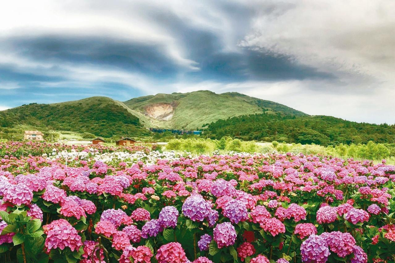 【2021繡球花季】陽明山8家必訪繡球花園,交通/門票/花期一次看! |