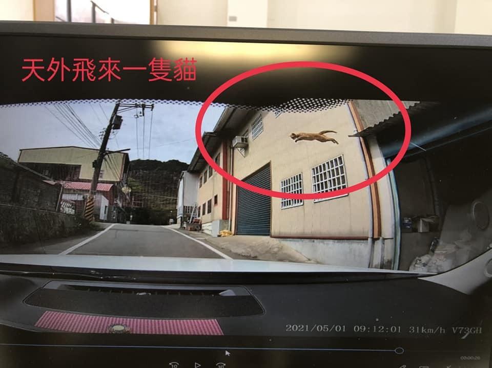 [新聞] 閃過一隻貓天外又飛來一隻貓 休旅車擋風玻璃碎成蜘蛛網