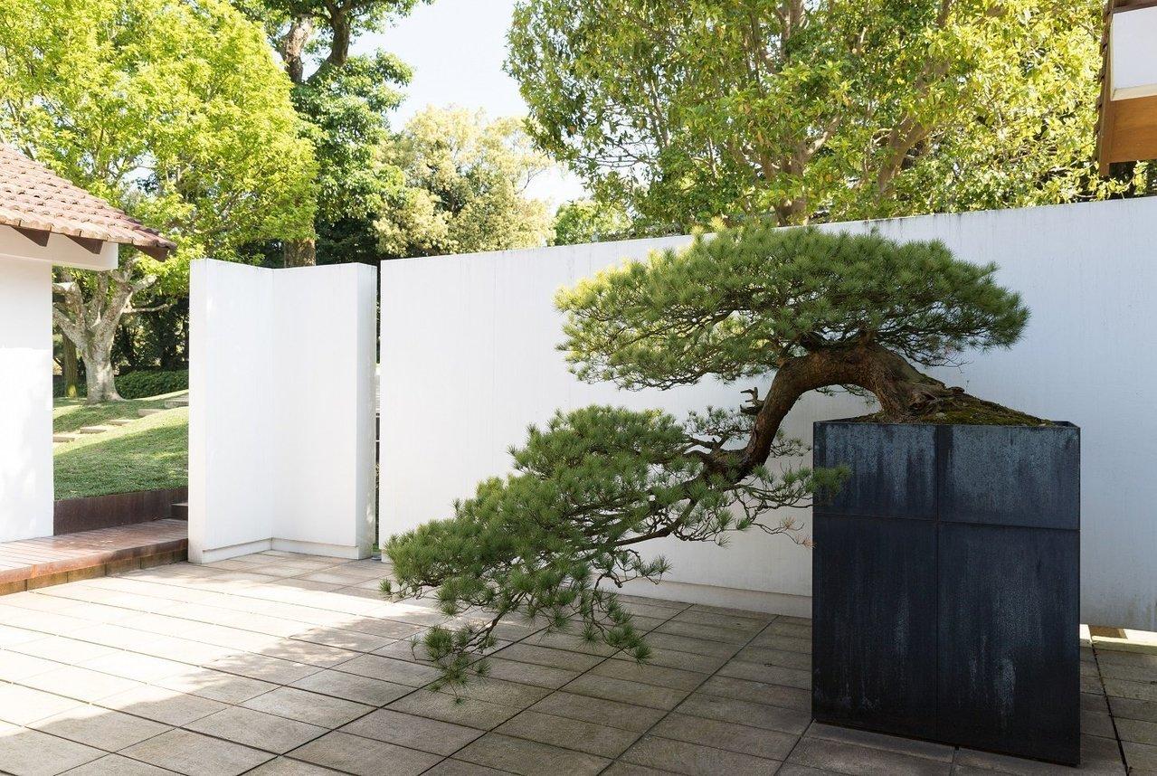 陳泰銘的生活品味延伸到一草一木。五葉松盆景就立在入門處。 記者陳立凱/攝影