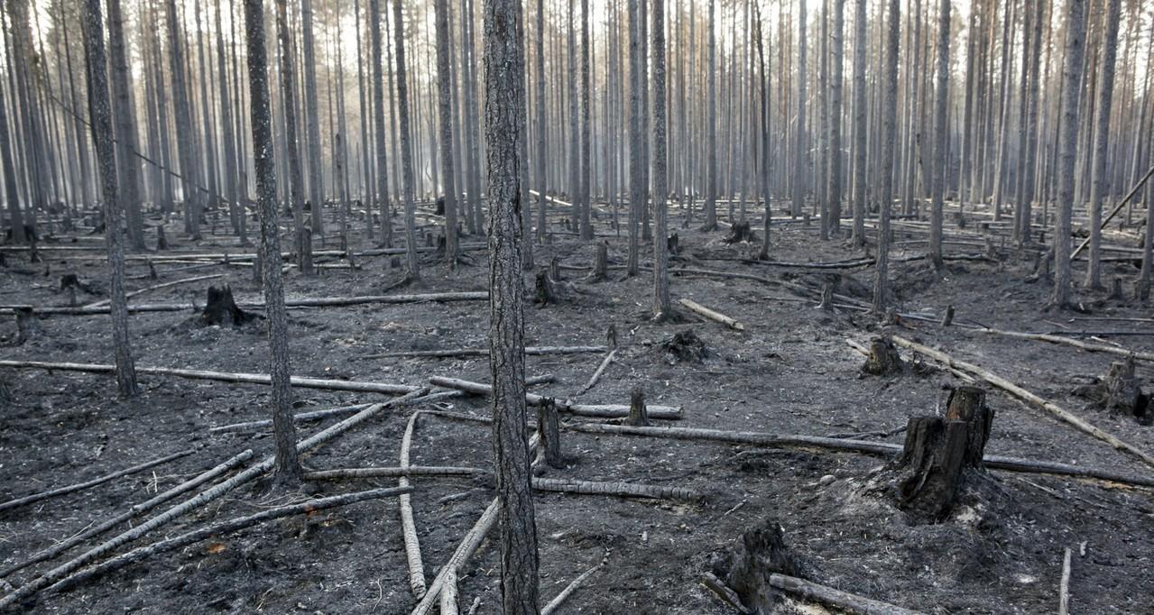 瑞典因熱浪引起多處大火。 美聯社