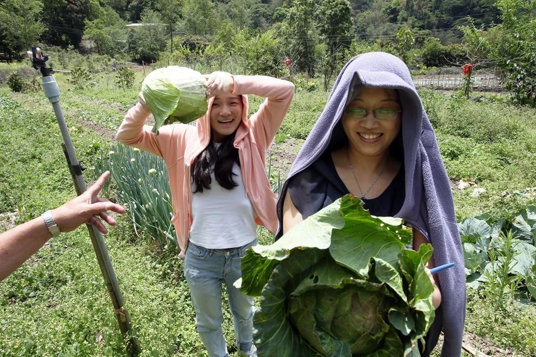 記者隨著校園廚工到自家農地摘菜,學童的菜大多來自這裡。彭宣雅(右)、連佩宇(左)