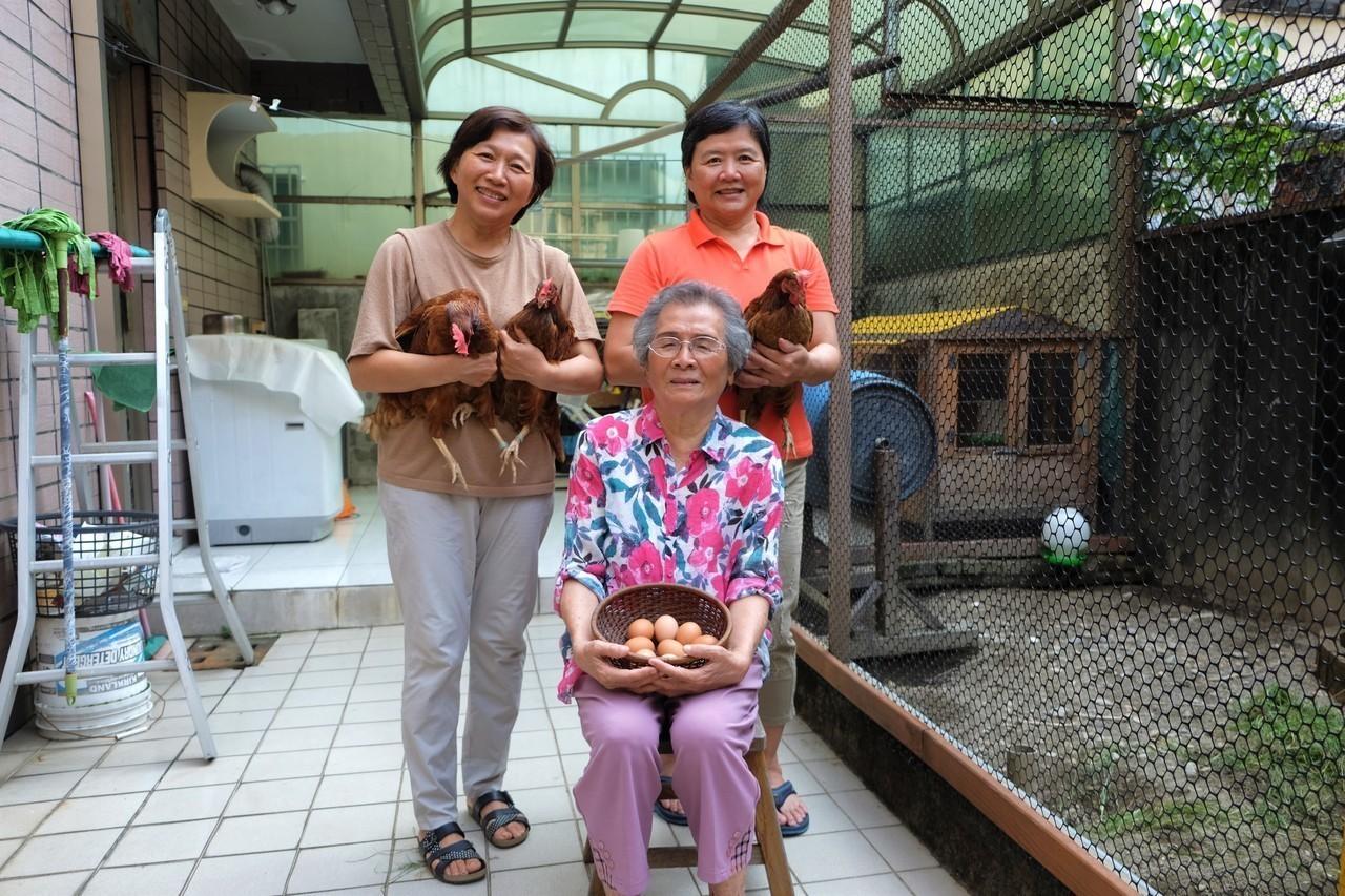 91歲的郭陳麗昭(中)在家養了3隻雞,從此吃飯有了牽掛。(攝影/郭琇真)