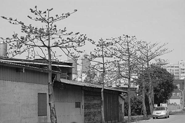1956年12月12日,桃園縣八德鄉的葉姓一家五人遭殺害。圖取自網路照片