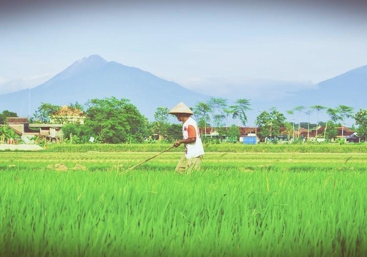 地方創生關鍵:發展農業轉型才有未來