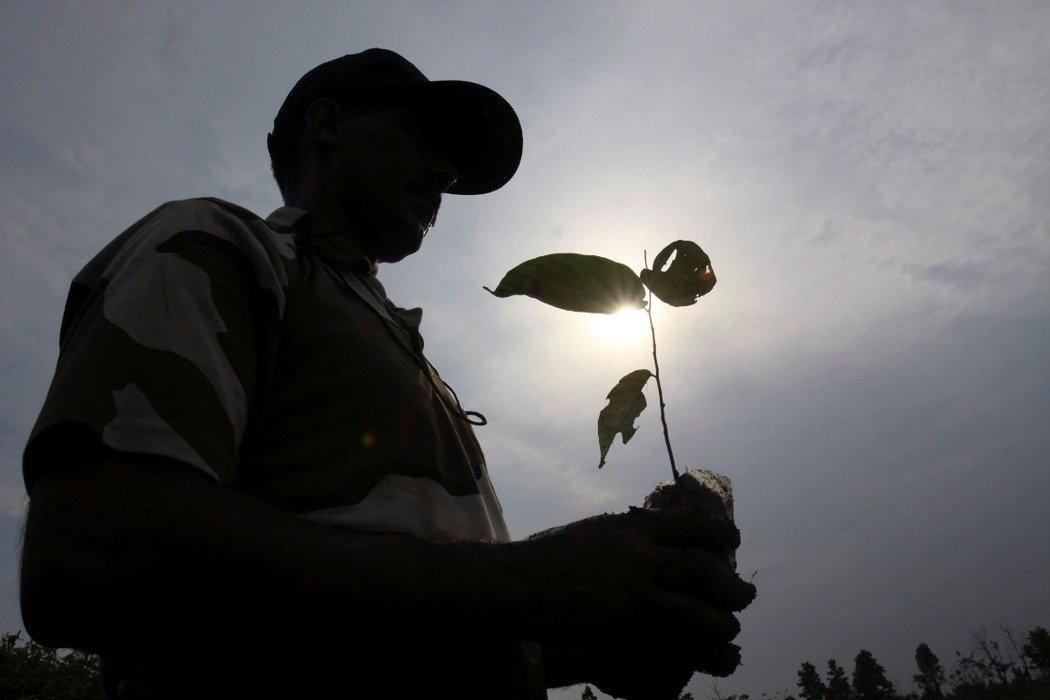 氣候危機最有效的方法!科學期刊:全球性植樹