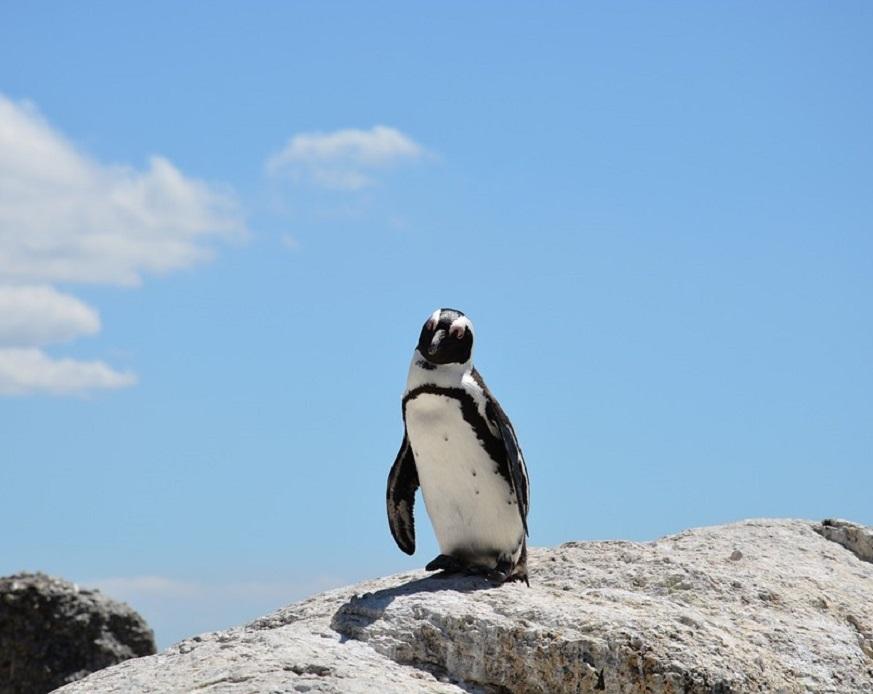15億只口罩流入海洋.....企鵝屍體胃內有口罩
