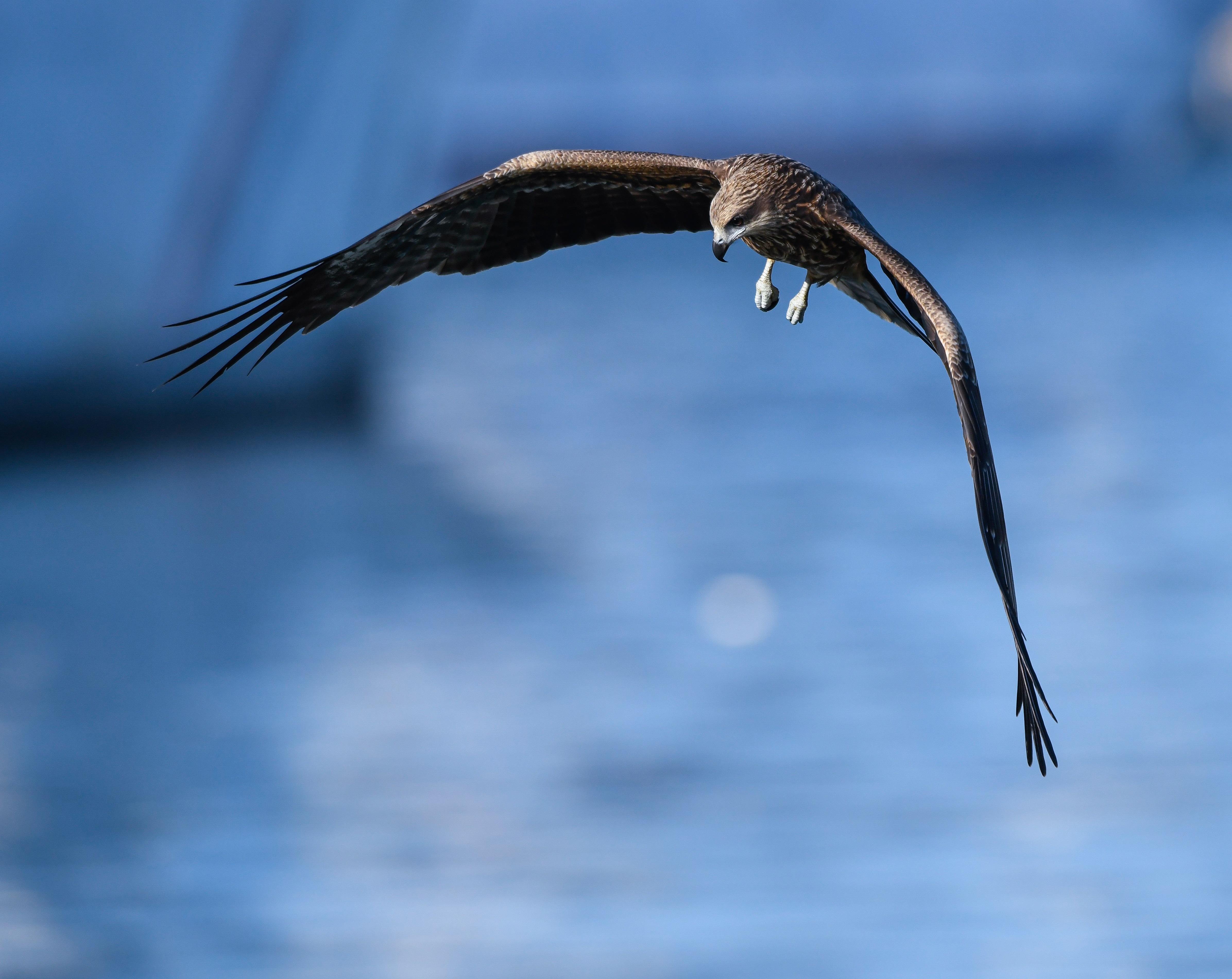 一條「無毒食物鏈」-買對農產,就是助老鷹翱翔